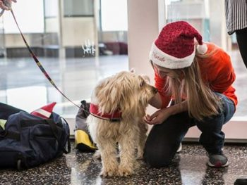 pet-therapy-aeroporto