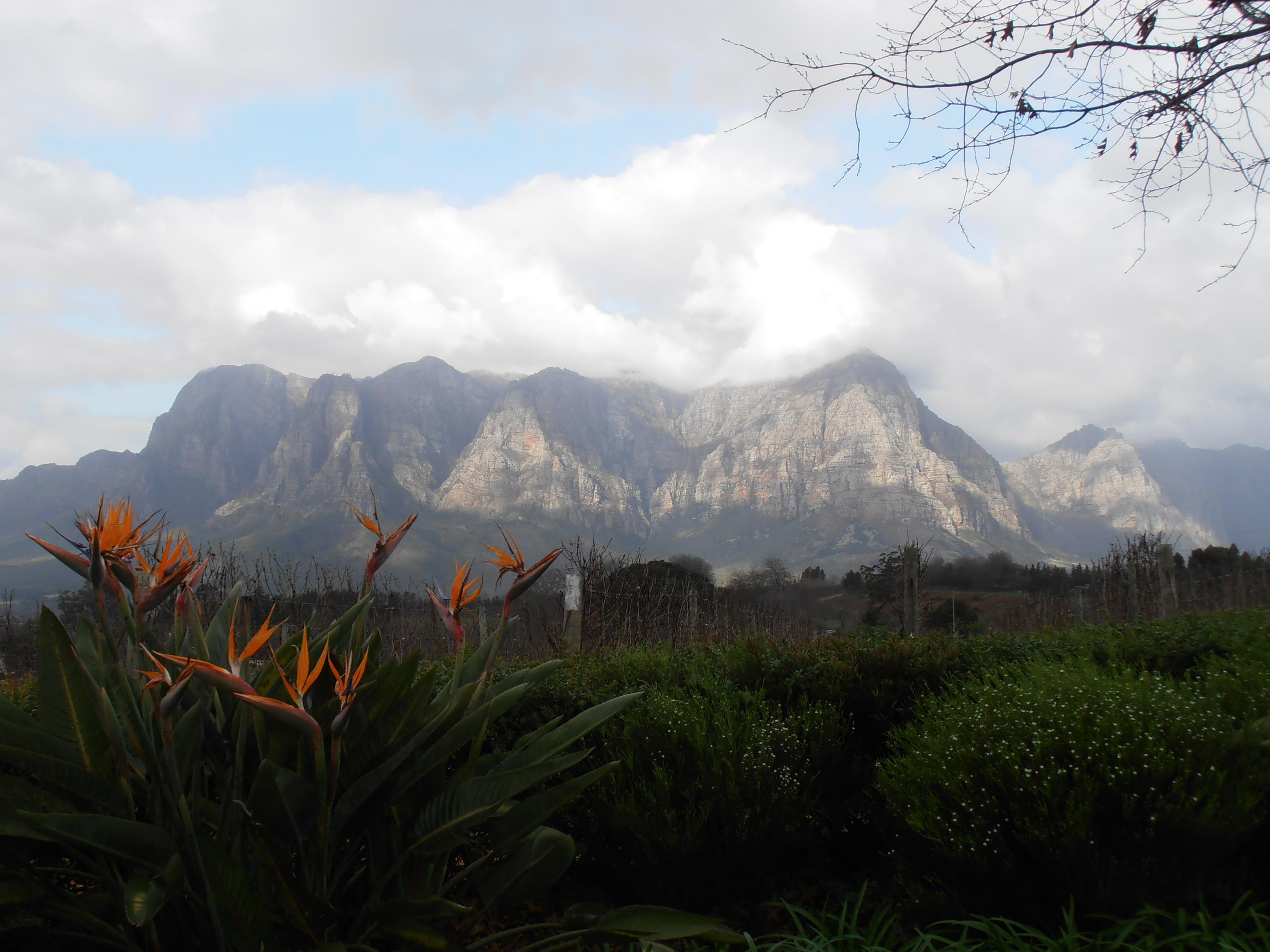 visitare-le-cantine-in-sudafrica