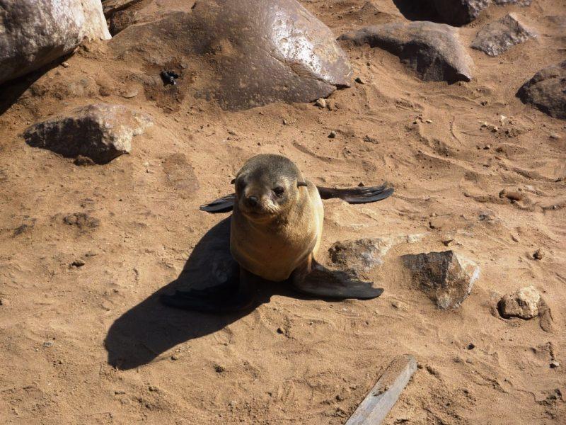 itinerario di 15 giorni in namibia