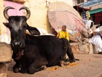 cose da non perdere a Varanasi